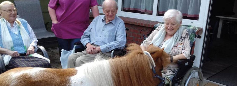 Ein Pony zu Besuch in unsere Tagespflege - Ihr Ambulanter Pflegedienst Harmonie GmbH in Hamm.